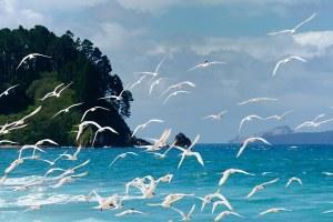 20090218095222_birds