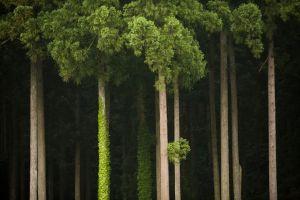 trees-japan-yamashita_59071_990x742