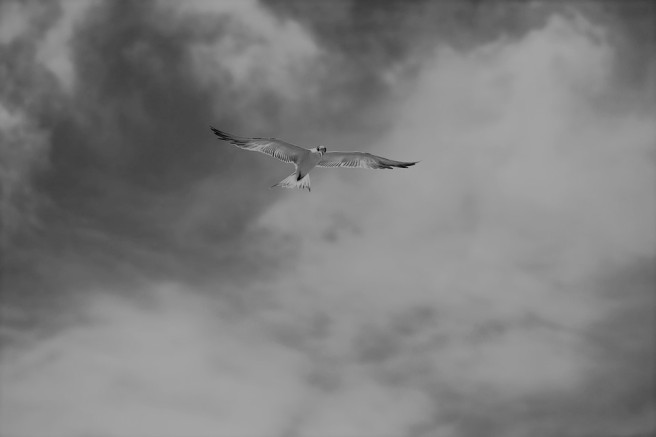 bird flying through the sky (2)